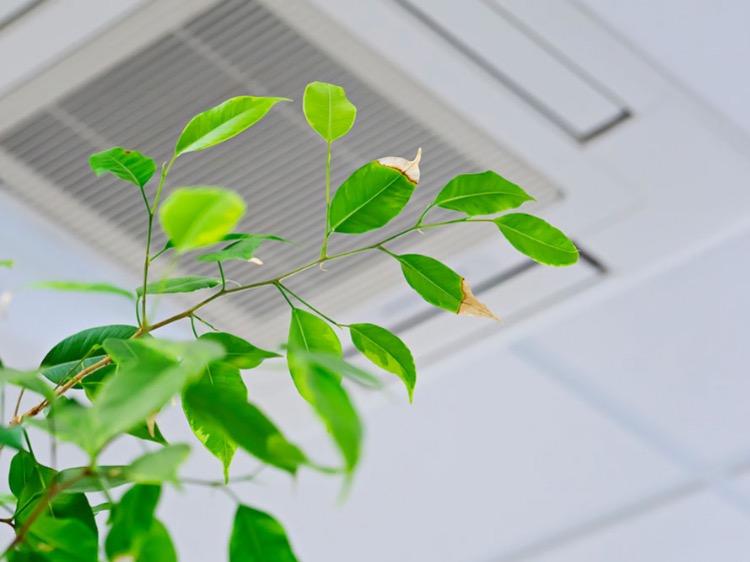 Qualità dell'aria sorvegliata speciale, all'aperto e indoor