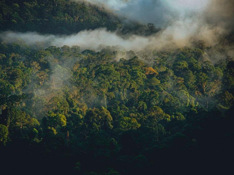 L'Amazzonia respira a fatica
