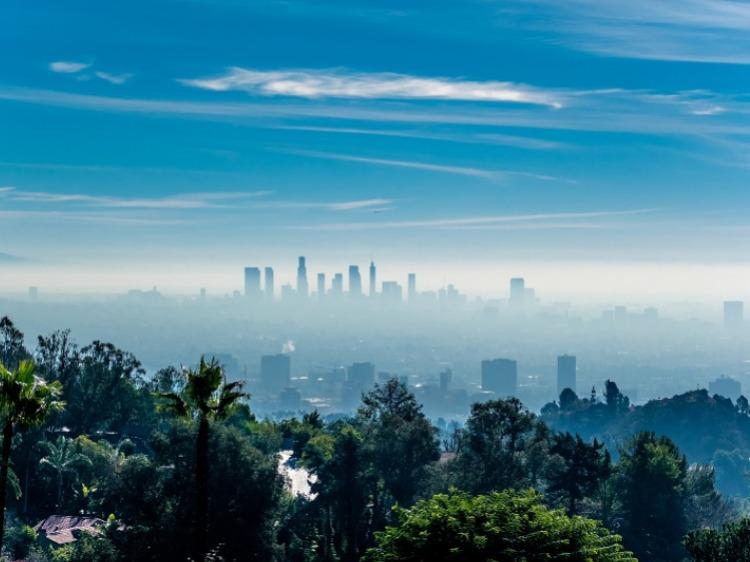 Piante mangia smog per pulire l'aria delle città
